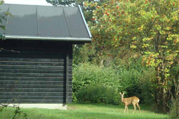 05-Blockhaus-Tisvilde-102-m2-008